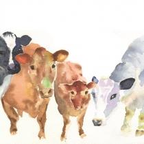 Childwickbury Cows